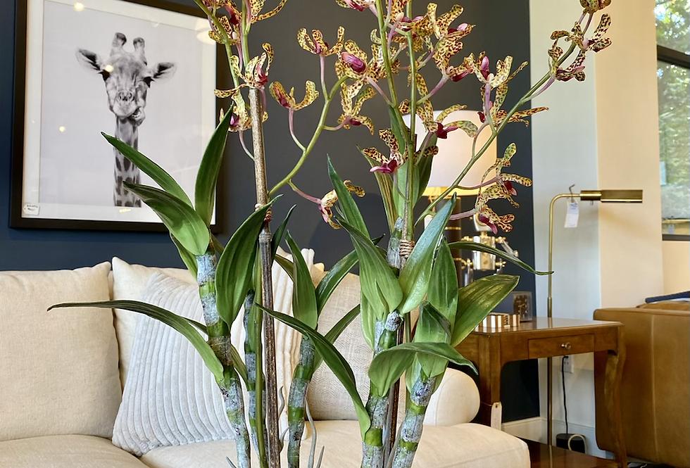 Dandrobium Orchid