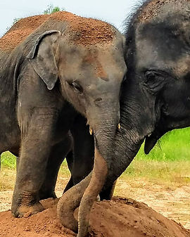 elephantsaustinevent3.jpg