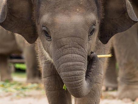 Farmers Feed the Elephants - World Elephant Day, August 12th