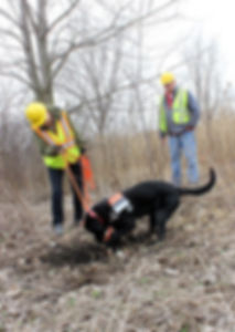 k9-pipeline-leak-detection4.jpg