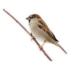 sparrow control services