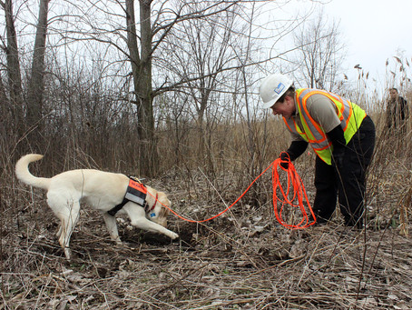 """Natural gas pipeline inspection dogs make a """"ruff"""" job easier"""