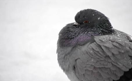 Bird Control Success Story: BirdSlide Prevents Swallow Nesting