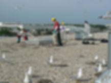 gull-egg-depredation-services-chicago.JP