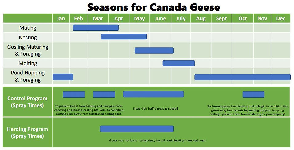 Canada Geese Seasons in Chicago