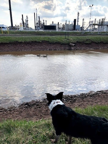 oil-refinery-bird-control-wildlife.jpg