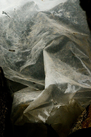 Pietà | ENOSIM — Cala Lunga, Ile de San Pietro, Sardaigne | 22 octobre 2012