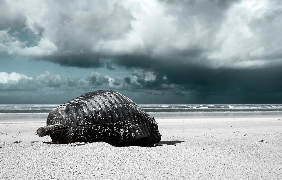 Whale | Océan Atlantique, France — 21 février 2014
