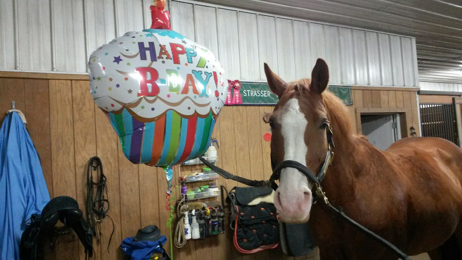 Ripple and his Birthday Balloon