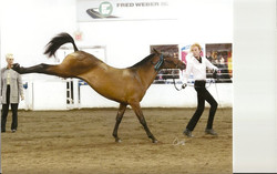 Martys' first in-hand class
