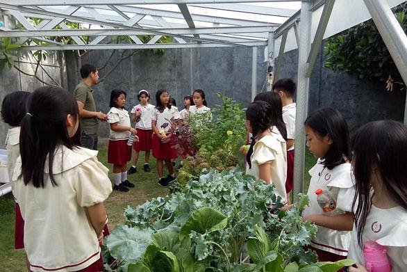 anak-anak belajar hidroponik di sekolah