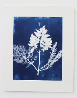 Ferns. SOLD
