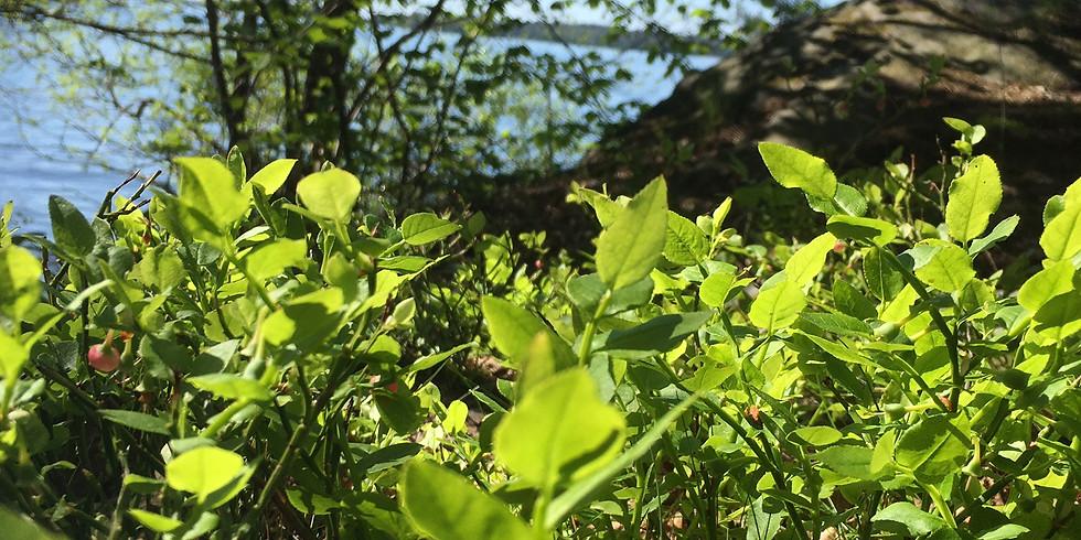 Görväln, Järfälla: Välgörande tid för dig i naturen