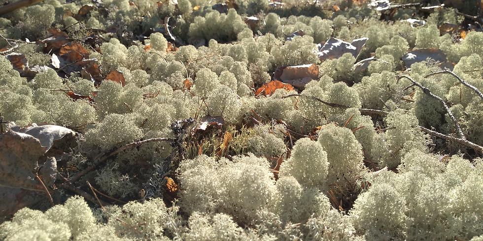Södra Törnskogen, Sollentuna: Egentid med naturen