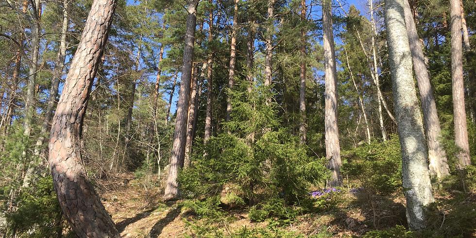 Görväln, Järfälla: Naturvaro med skog och vatten