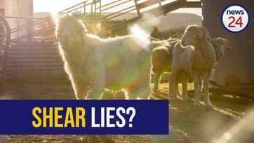 Shear lies: Farmers slam 'misrepresentative' mohair exposé