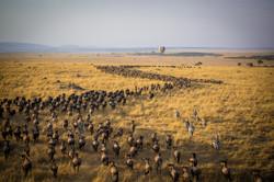 Masai Mara wildebeest migration.