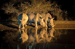 Nightcap for rhinos