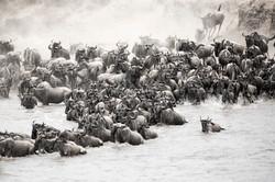 A herd crosses the Mara River.