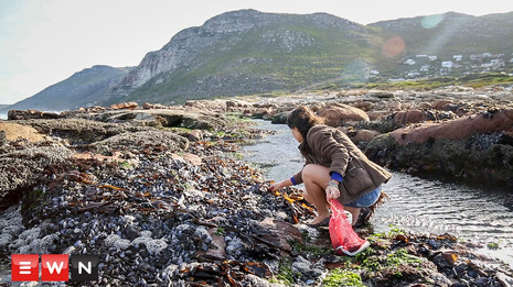Coastal cuisine: Overlooked food on our rocky shores