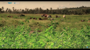 Can technology transform the lives of rural African farmers?