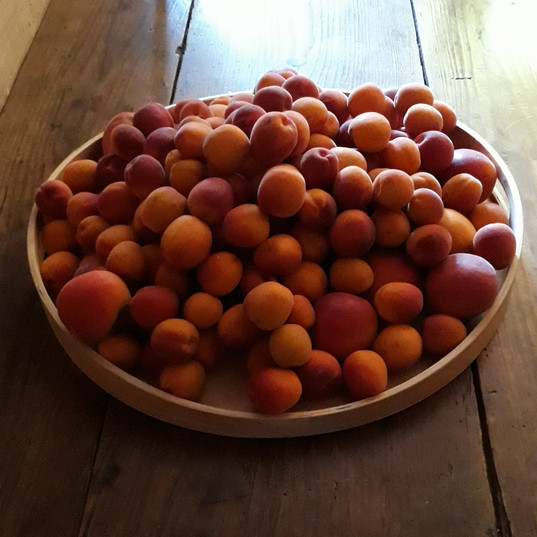 fabulous apricot season