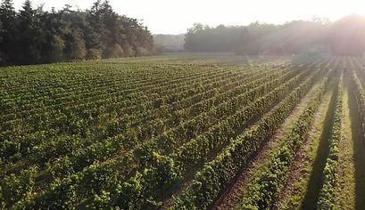 MAN vineyard testimonial