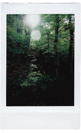 woods new.jpg