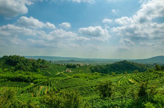 Creating virtual wine trips