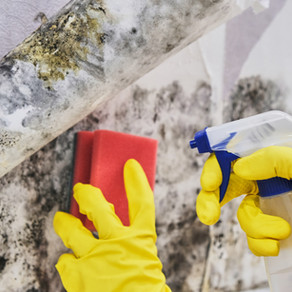 DIY MOLD CLEANERS TIPS