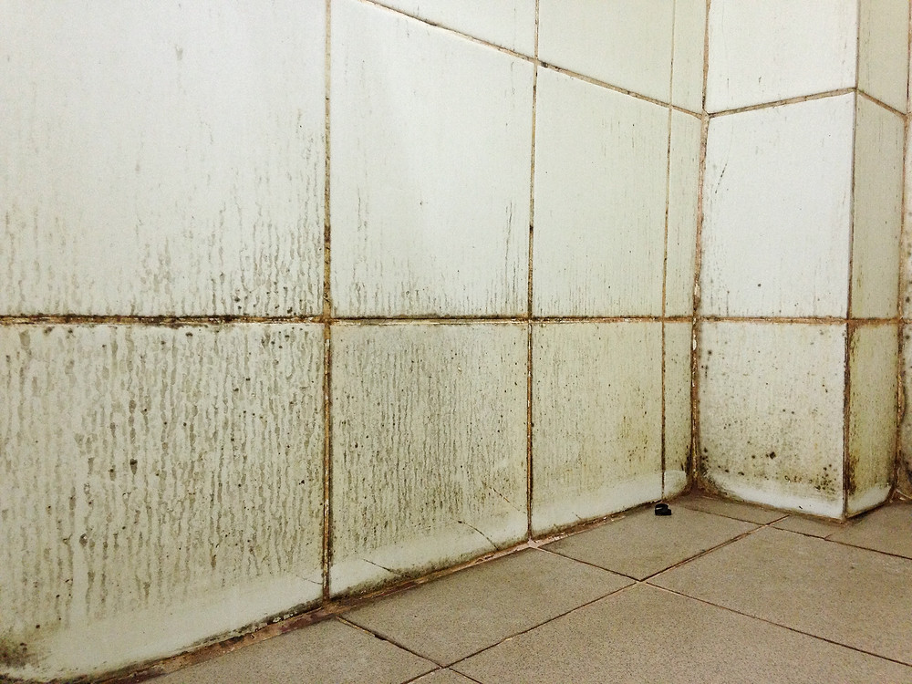 Blue River Restoration Tips from BRR to Help Your Bathroom Stay Mold Free