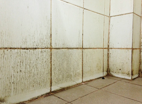 Tips from BRR to Help Your Bathroom Stay Mold Free