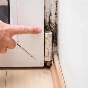 WHAT TO DO WHEN MOLD IS FOUND