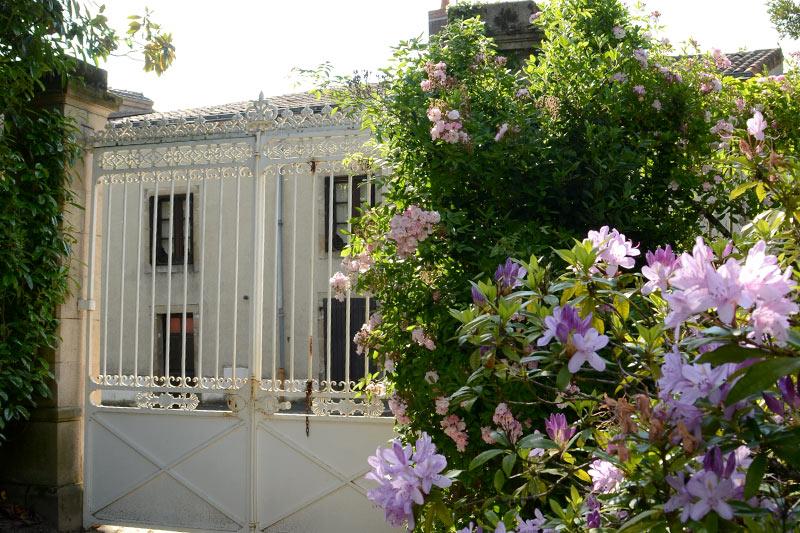 les rhododendrons devant la grille