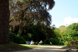 Les arbres majestueux du parc