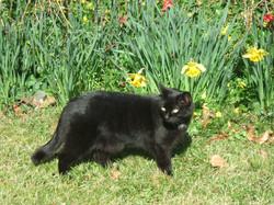 La chatte Safi