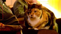 La chatte Herton