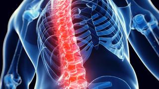 Spine (Neck & Back)