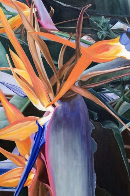 Bird of Paradise Flower Picture - The Jewel in the Crown