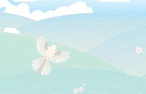 Illustration Design Tauranga