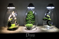The D'Orb is a new concept of nanovivarium