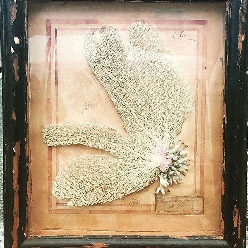 Antico quadro con corallo del 1923
