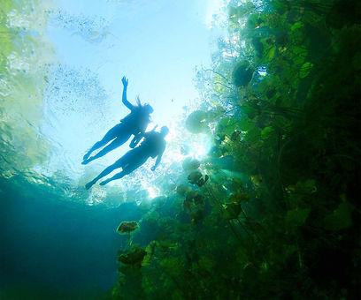 xenotes-tour_cenote-ha.jpg