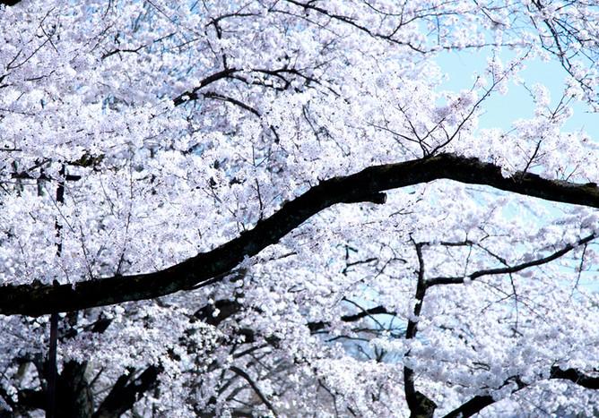 mar.2015 tokyo