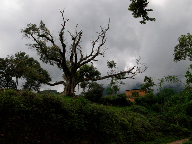 jul,2014 nepal