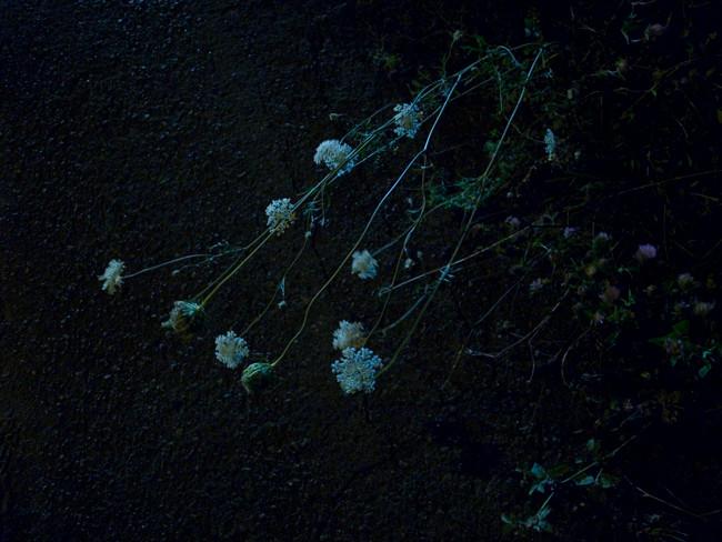 aug.2015 tokyo