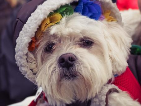 Sobre os pets no Carnaval