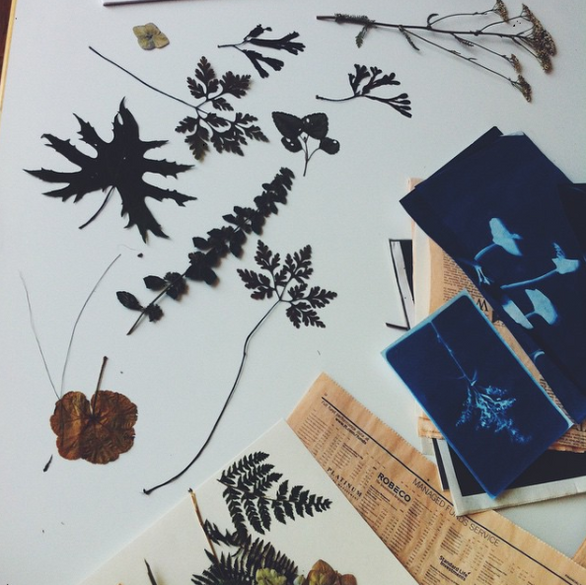 herbaria - cyanotypes