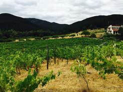 vidacycle vineyard