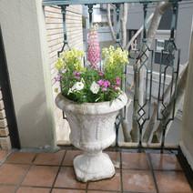 花壇(鉢植え)